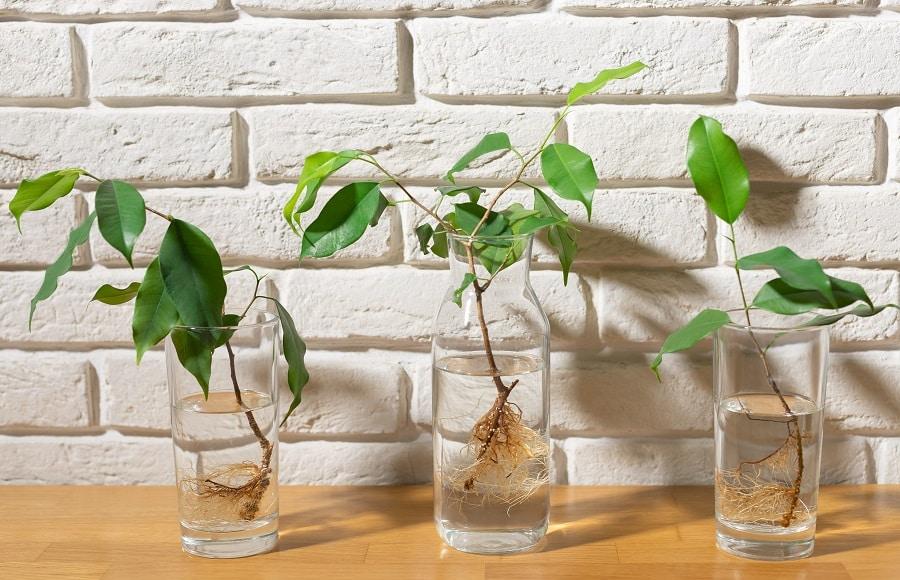 plantjes gestekt