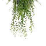 bladeren van aeschynanthus