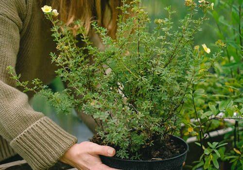 vrouw plant