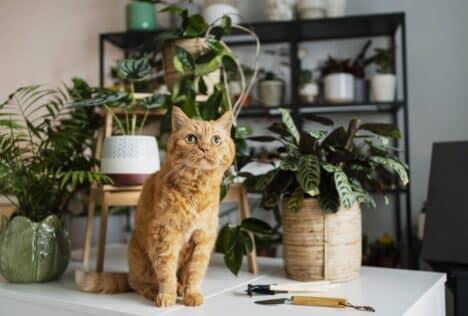 kat op tafel met planten