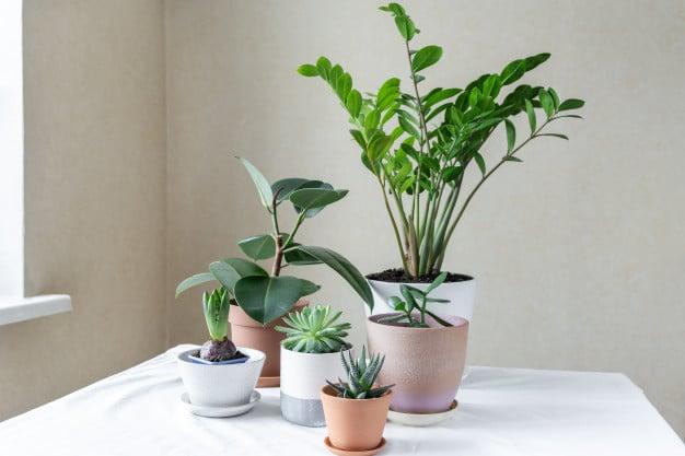 planten in pot op tafel