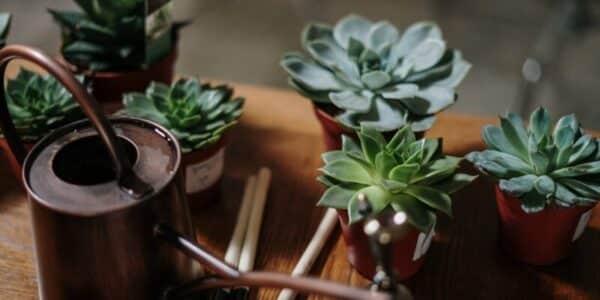 gieter vetplantjes