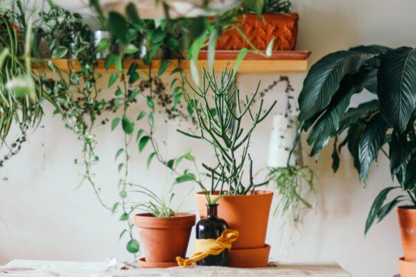 twee planten in pot