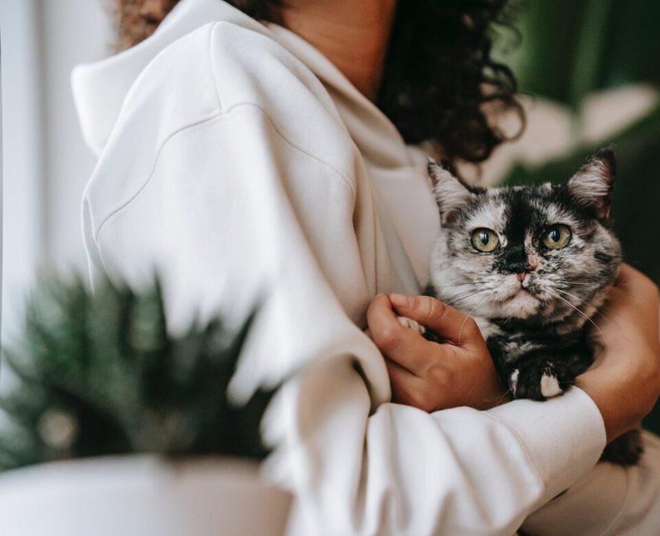 kat in armen met plant