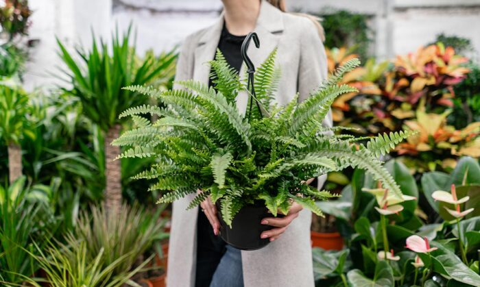 planten kopen