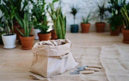 planten voeding in zak