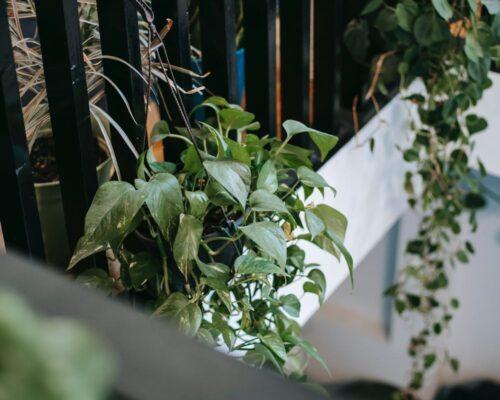 hangplant aan balkon