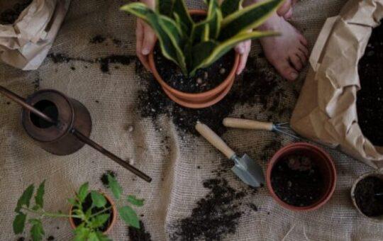 verpotten planten