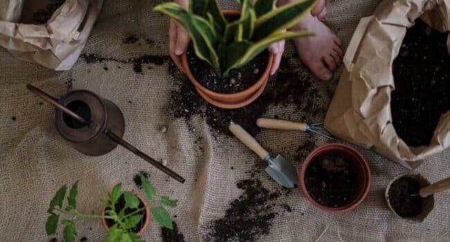 verpotten van planten