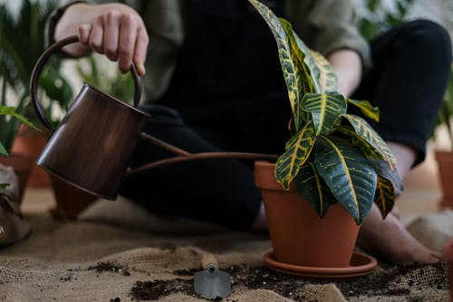 water geven aan plant