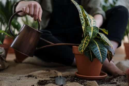 water geven plant