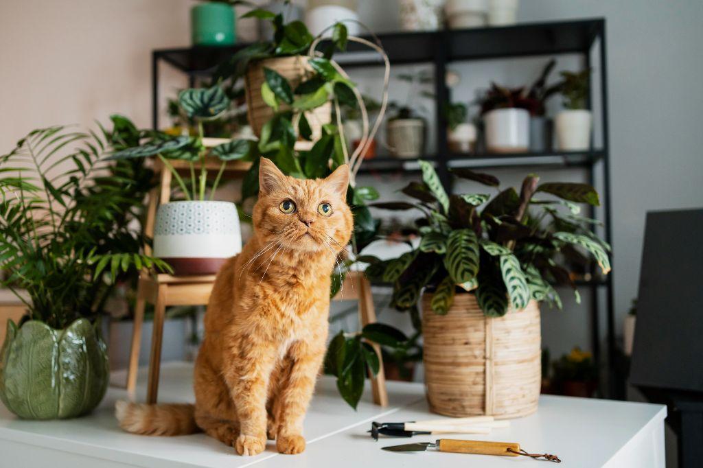 kat met planten